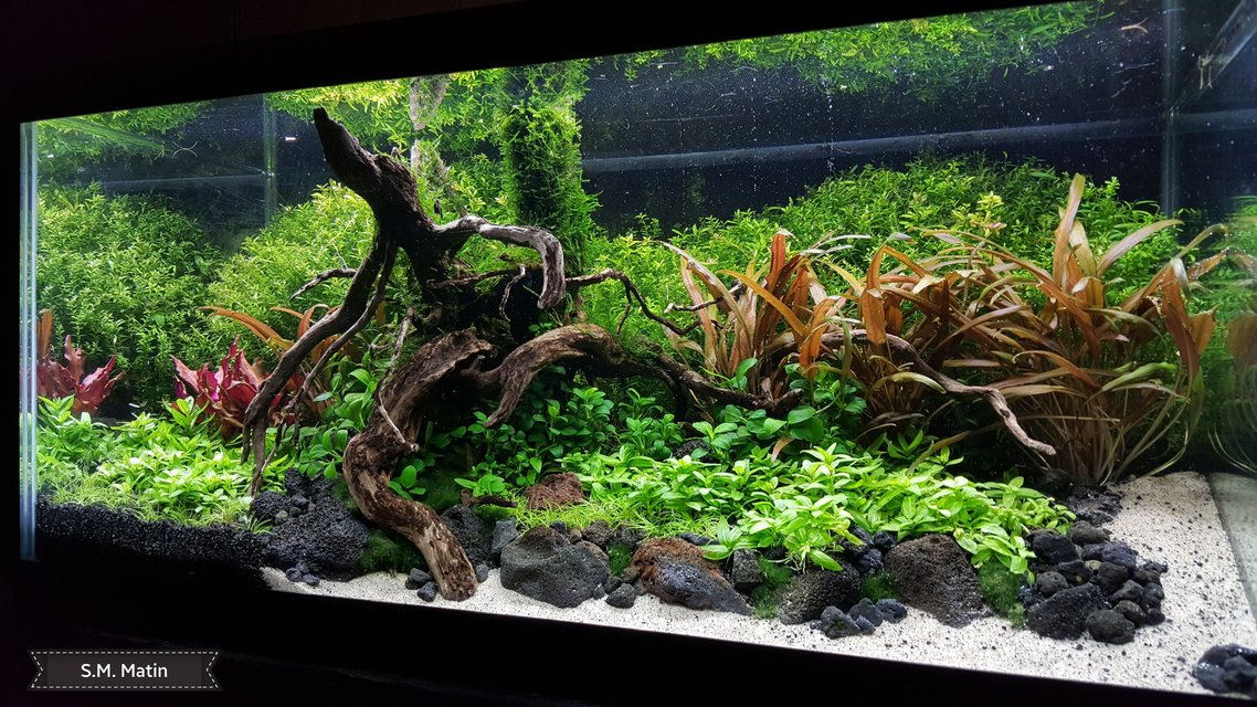 Rated #1: 15 Gallons Planted Tank - My 15 gallon high energy planted tank.