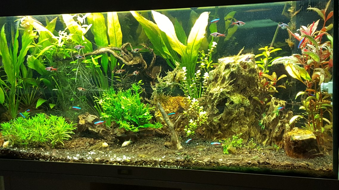 Rated #22: 100 Gallons Planted Tank - early stages planted tank