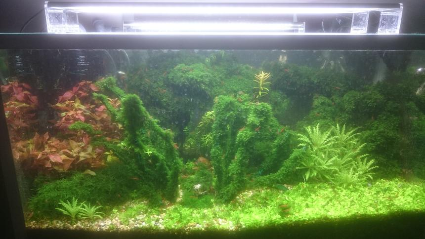 Rated #7: 25 Gallons Planted Tank - shrimp tank
