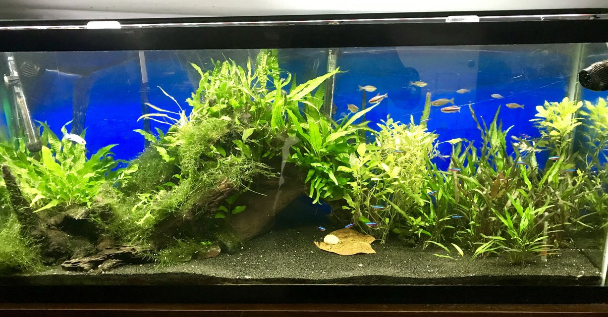 Rated #10: 55 Gallons Planted Tank - 55 Gallon Planted