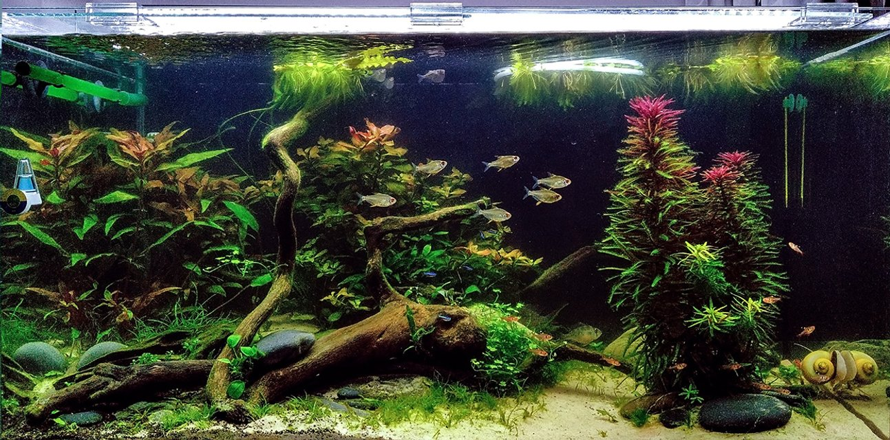 Rated #1: 48 Gallons Planted Tank - my planted tank
