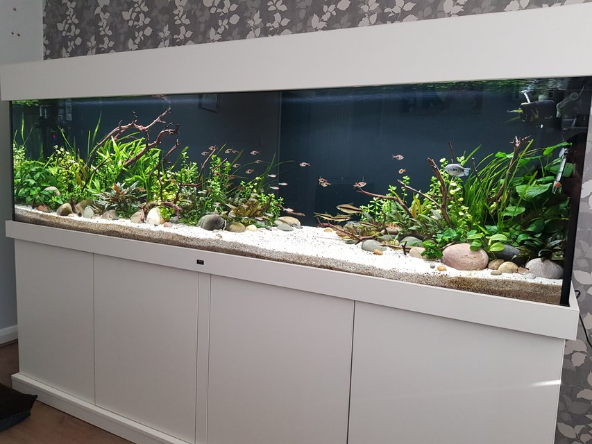 Rated #3: 160 Gallons Planted Tank - 7 foot, 600 litre planted community aquarium with Optiwhite glass. Fx6 and fluval 407 filteration, 2 x fluval plant 3.0 46w lighting. Tropica substrate capped with pool filter sand, manzanita wood and river rock used for hardscape.