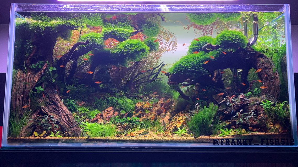 Rated #2: 60 Gallons Planted Tank - Tsunami