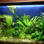 25 gallons planted tank (mostly live plants and fish) - my tank 2 months old