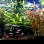 125 gallons planted tank (mostly live plants and fish) - Sorry!Picture quality is limited by the upload capacity of the site.