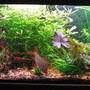 75 gallons planted tank (mostly live plants and fish) - 75 Gallon Tank
