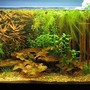 13 gallons planted tank (mostly live plants and fish) - 13 gallon Asian biotope