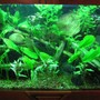 45 gallons planted tank (mostly live plants and fish) - Planted Freshwater with Discus