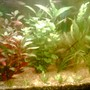 47 gallons planted tank (mostly live plants and fish) - my planted tank photo taken from nokia 3230