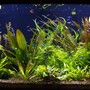 190 gallons planted tank (mostly live plants and fish) - aquarium 3 month old