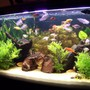 65 gallons planted tank (mostly live plants and fish) - Jebo 100x50x50cm , 4 x 40 watts lightning, jebo filter , soft gravel