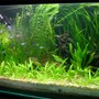 42 gallons planted tank (mostly live plants and fish) - I keep fresh water fish long time ago but when i saw sum planted tank photos on net when I surfing sum information that time I decide to kept the planted tank. I am a 3D graphic Artist This is my fish tank i have had it for about 2 year.34x14x15 Freshwater Planted Tank Fertilizer capsule & CO2 injected, bogwood with some very nice rock formations light with aquarium light Amazon soared, Banana, Vallisneria, red lily, creptocorin, sarotoptoris,nupur japanica