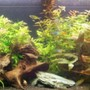 125 gallons planted tank (mostly live plants and fish) - 125 Planted tank CO2 injected 5 watts per gallon. Picture quality is limited by the upload capacity of the site.