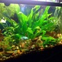 30 gallons planted tank (mostly live plants and fish) - 30 Gallon with blue Dwarf Gourami, school each of Neon Tetras and Longfinned Danios, 3 Spotted Cories, 2 African Dwarf frogs, and a healthy population of snails.