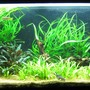 86 gallons planted tank (mostly live plants and fish) - Aquatic Delight.
