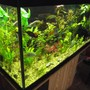 75 gallons planted tank (mostly live plants and fish) - the 75gallon