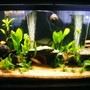 125 gallons planted tank (mostly live plants and fish) - addition of new plants, sand & Co2