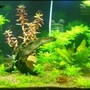 75 gallons planted tank (mostly live plants and fish) - My 75G Planted Acuarium Front View