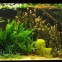 422 gallons planted tank (mostly live plants and fish) - angelfish, discus, planted aquarium