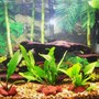 55 gallons planted tank (mostly live plants and fish) - 20g planted brackish assorted mollies driftwood lava rocks -what rating would you give this tank?-