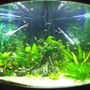 55 gallons planted tank (mostly live plants and fish) - Jebo Corner Tank 200l +-45 fish