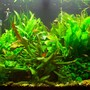 71 gallons planted tank (mostly live plants and fish) - The tank a few months on...