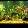 55 gallons planted tank (mostly live plants and fish) - 55gal planted with tetras,cats,shrimp,and snails