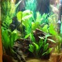 75 gallons planted tank (mostly live plants and fish) - 30 gal Piranha tank