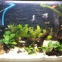 30 gallons planted tank (mostly live plants and fish) - Newly set up (20/9/2013)