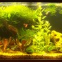 55 gallons planted tank (mostly live plants and fish) - bonzi look