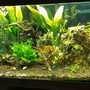 100 gallons planted tank (mostly live plants and fish) - early stages planted tank