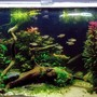 48 gallons planted tank (mostly live plants and fish) - my planted tank