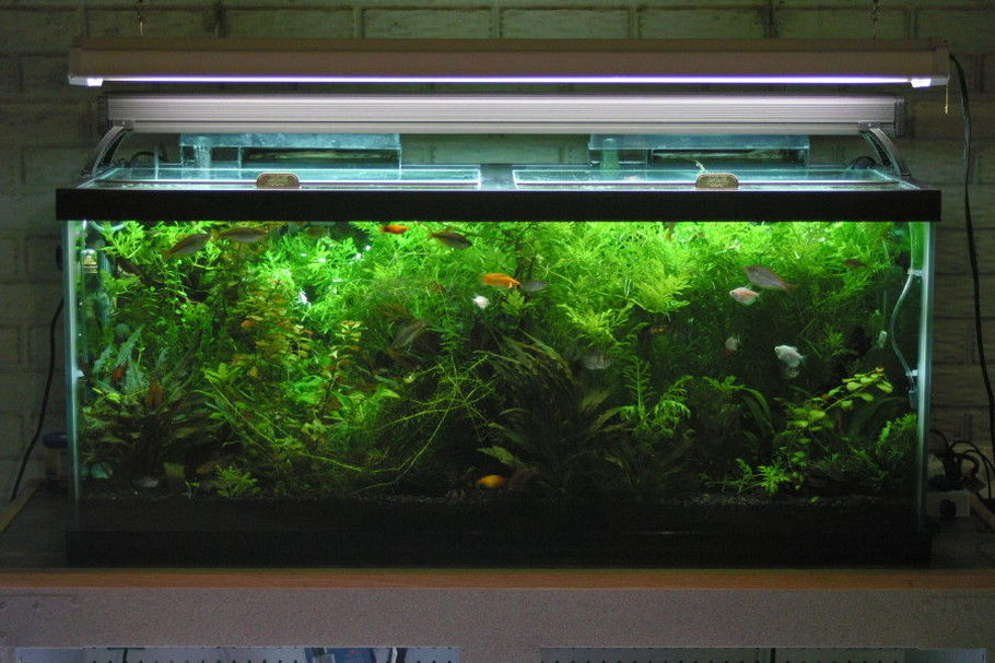 Findingjohn 39 s planted tanks photo id 31442 full for Fish tank live plants