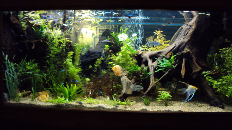 Most Beautiful Planted Tanks 2010 Ratemyfishtank Com