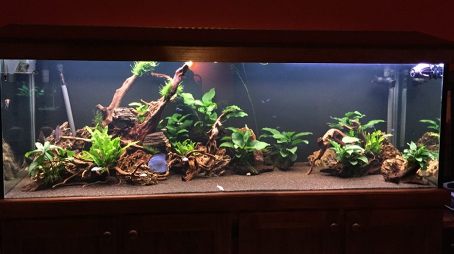 most beautiful planted tanks   2015