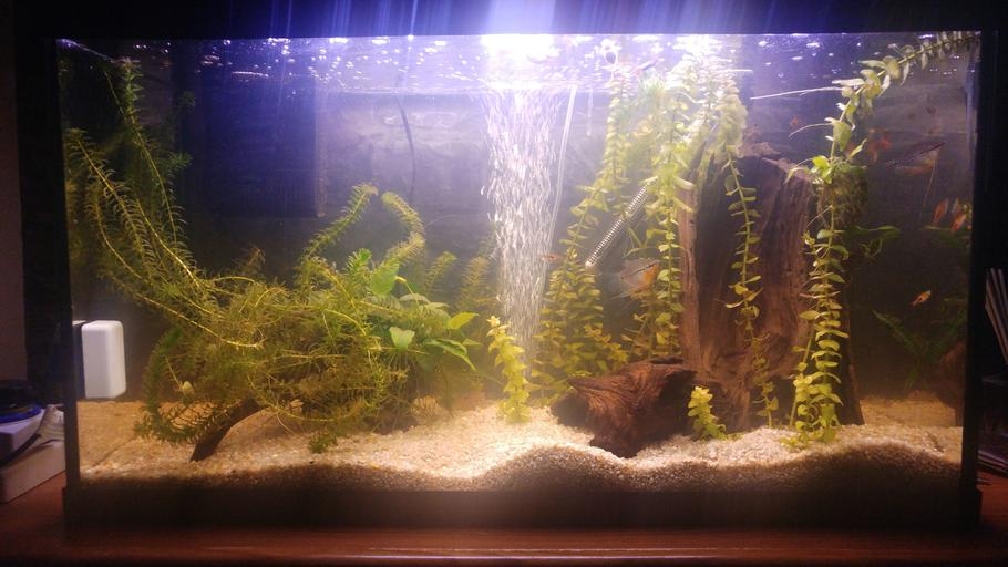 My peaceful small community planted fish tank