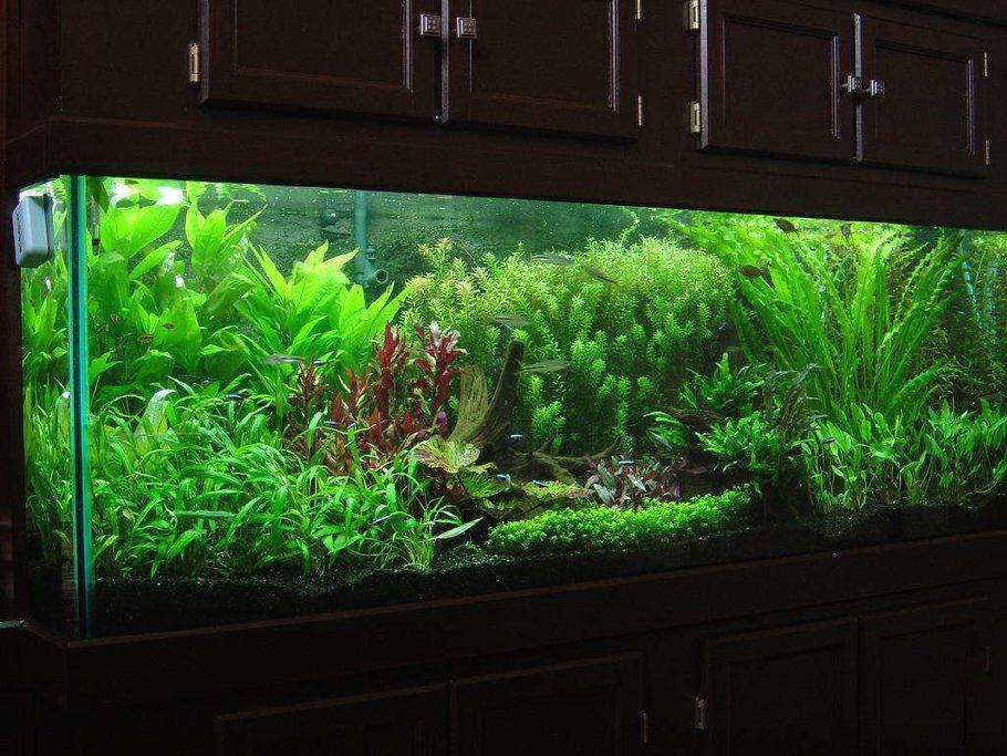 Fishman76092 S Planted Tanks Photo Id 8838 Full