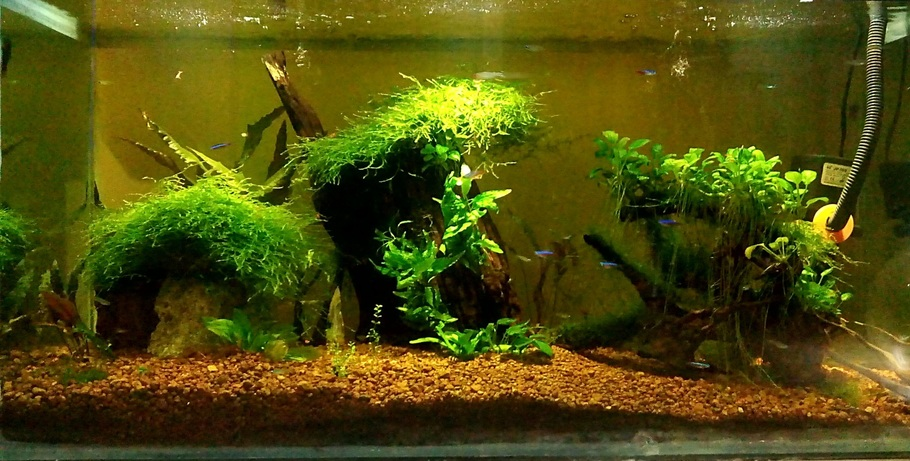 how to set up a fish tank with live plants